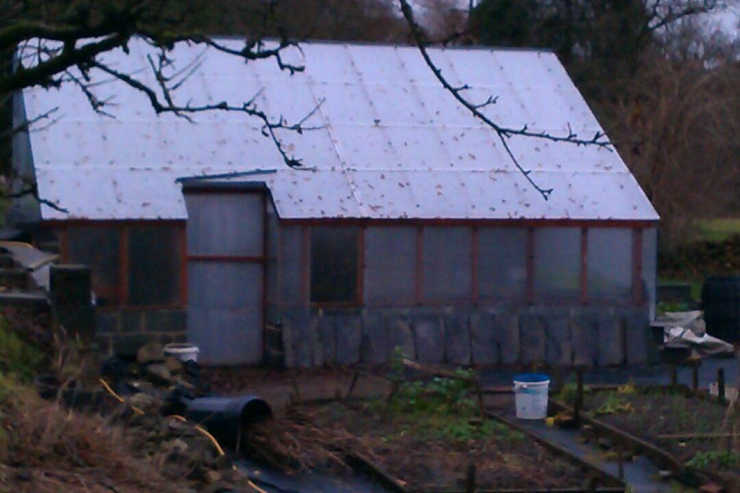 Our new greenhouse in the potager, which Ivor constructed, backing up against the wall