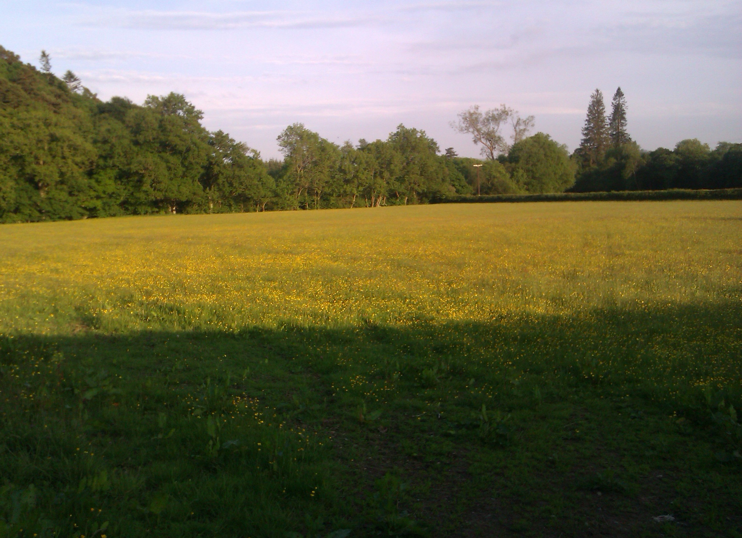 A local meadow, on a bright day