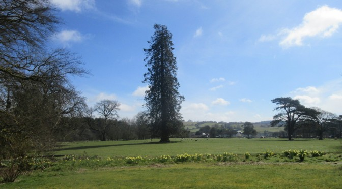 The Beulah showfield, taken from our garden